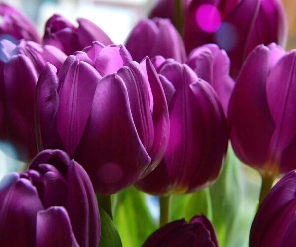 Celebrar el día de la mujer el 8 de marzo